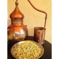 Production of hydrolat, Chamomile